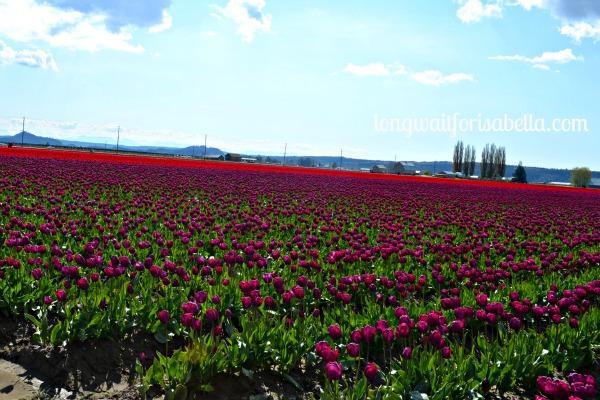tulip festival 2