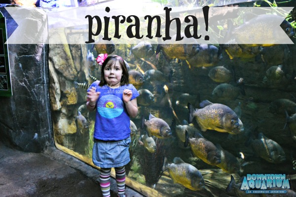 Piranha Fish Tank Great Low Tank Piranha Fish