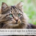What age is good for a first pet?