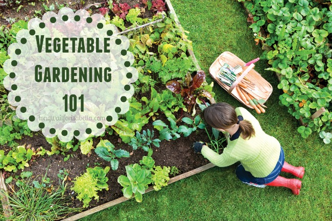 Getting Started Vegetable Gardening