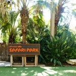 SD Zoo Safari Park