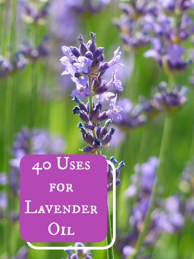 40 Uses for Lavender Essential Oil