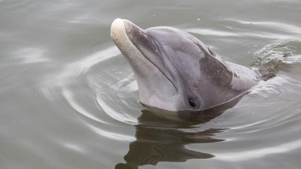 dolphins gcfl