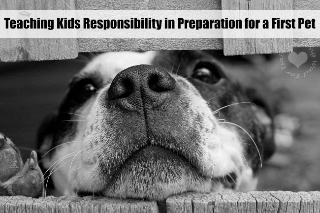 First Pet Responsibility