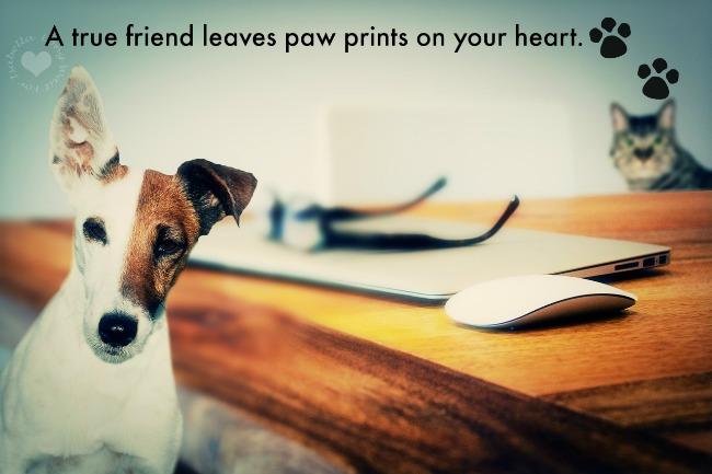 Pet Paw Prints Quote