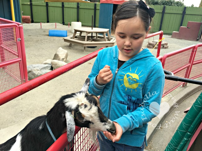 Feeding Goats at Kids' Zone