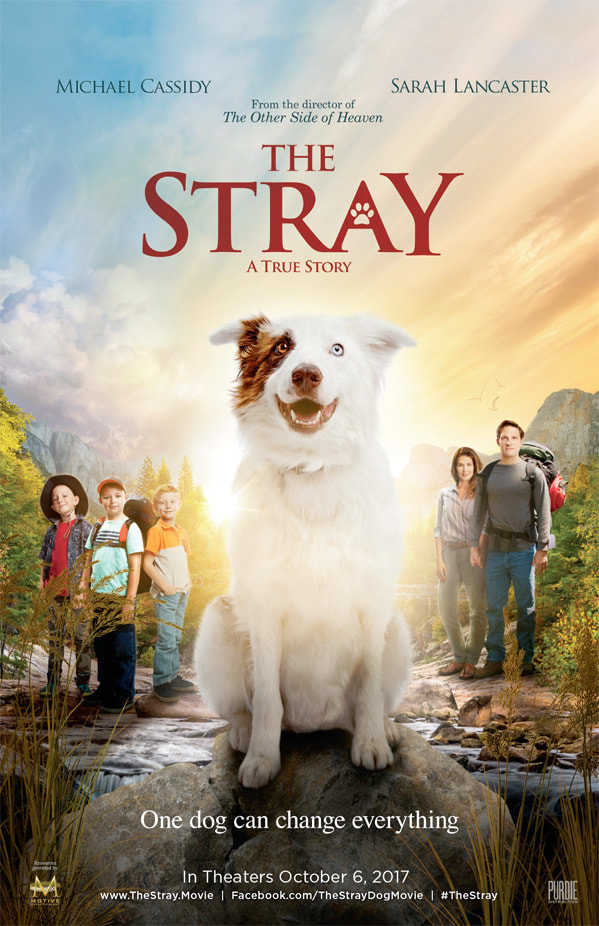 The Stray Movie Now in Theaters!