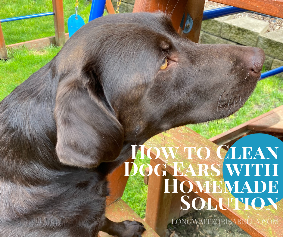 How to Clean Dog Ears with Homemade Solution
